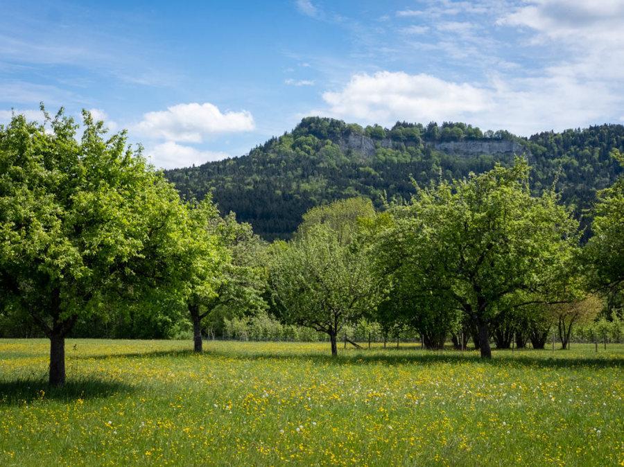 Ausblick auf Obstbaumwiesen, im Hintergrund das Hörnle